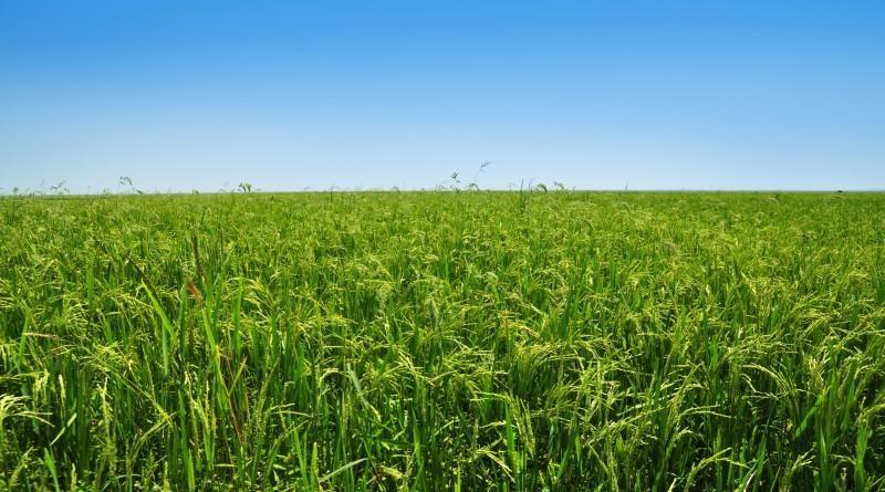 मध्यप्रदेश में कृषि विभाग की योजनाओं की गड़बड़ियों को किया जायेगा दूर