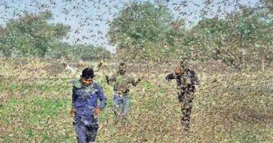 टिड्डी प्रभावित किसानों को मुआवजा मिलेगा