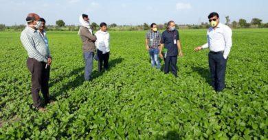 मध्य प्रदेश : होशंगाबाद जिले में बंपर होगी ग्रीष्मक़ालीन मूँग फसल