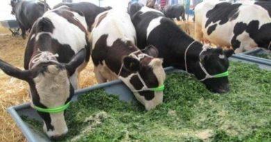 पशुपालन विभाग ने राजस्थान में 33 पशुधन सहायकों को नियुक्ति दी