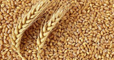 एमएसपी पर 5490 करोड़ रूपये का 57.59 लाख टन गेहूँ मध्य प्रदेश में उपार्जित