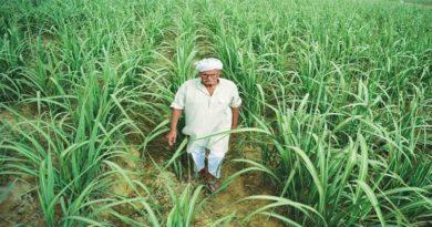 ग्रामीण क्षेत्रों में आत्मनिर्भरता बढ़ाने और रोजगार सृजन पर दे विशेष जोर