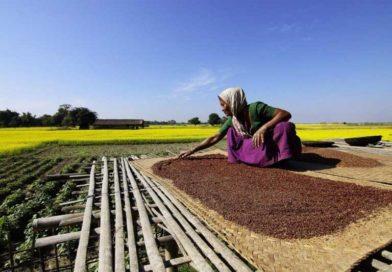 मध्य प्रदेश में चना मसूर सरसों की उपार्जन सीमा समाप्त