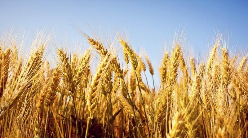 मध्य प्रदेश : किसानों को फसल बेचने मंडी जाने की अनिवार्यता नहीं