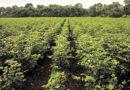 खरीफ फसलों की तैयारी कैसे करें