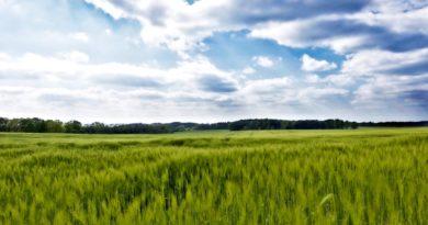 crop loan