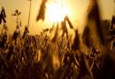 सोयाबीन में पोषक तत्वों की आपूर्ति