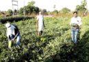तरबूज फसल से बदल रही अलीराजपुर के किसानों की तकदीर
