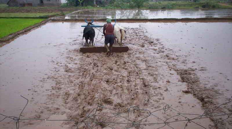 कोई भी किसान फसल बीमा से वंचित नहीं रहे - बैंक मैनेजरों को निर्देश