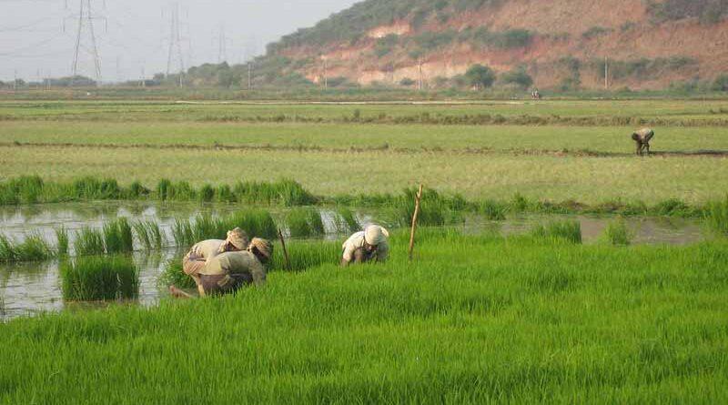 किसान भाई 31 अगस्त तक फसलों का बीमा कराएँ : मंत्री श्री पटेल