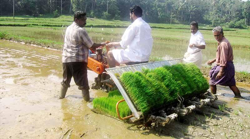 Paddy planter