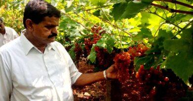 माटी कवच पहनाए फसलों को चिंतला रेडी ने विपुल उत्पादन के लिए किए अभिनव प्रयोग