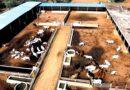 डेयरी, मांस प्रसंस्करण और पशु आहार संयंत्र स्थापित करने के लिये मिलेगा ऋण