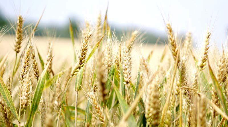 मध्य प्रदेश में कृषि केबिनेट का कर्मकांड