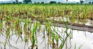 crops rain