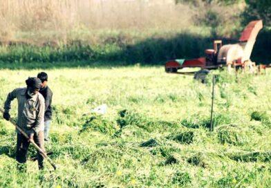 अपात्र ऋणी किसानों को भी मिल सकेगा फसली ऋण