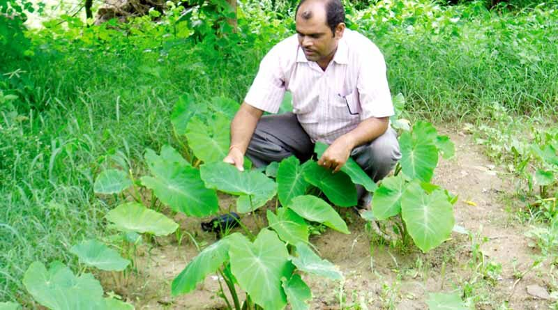 horticulture1