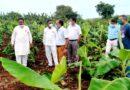 केला किसानों को आर्थिक सहायता मिलेगी