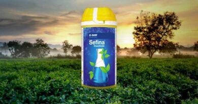 बीएएसएफ सेफीना तेला, सफेद मक्खी वयस्क और बच्चे के नियंत्रण के लिए प्रभावी