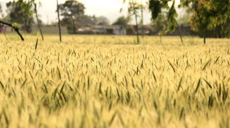 cropss