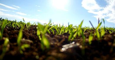 horticulture crop