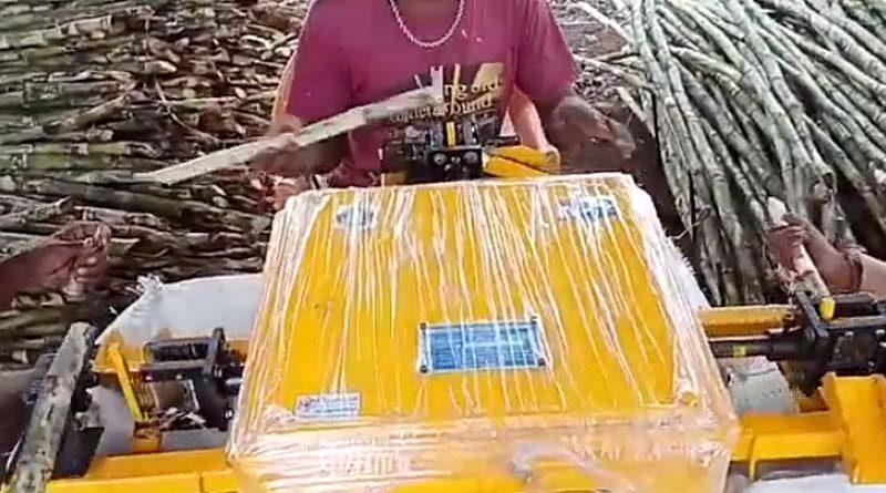 sugarcane bud cutting