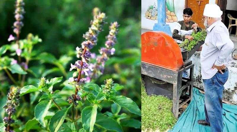 तुलसी की खेती मुनाफा देती