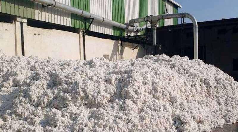 cotton mandi