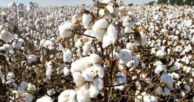 cotton khargone