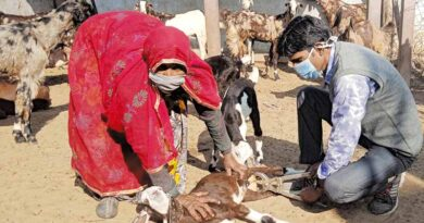 goat badhiyakaran