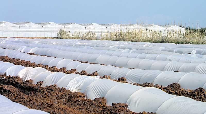 सर्दी और पाले से फसलों को बचायें