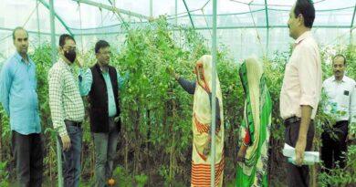 tomato udhyan