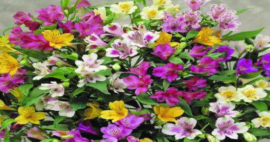 फूलों की खेती मुनाफे की