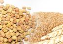 किसानों को चना में तेवड़ा और गेहूं में मिट्टी की रोकथाम के उपाय बताएं
