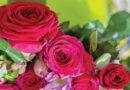 Disease Management in Roses