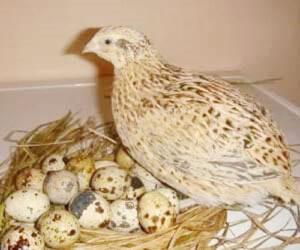 अंडों की देखभाल