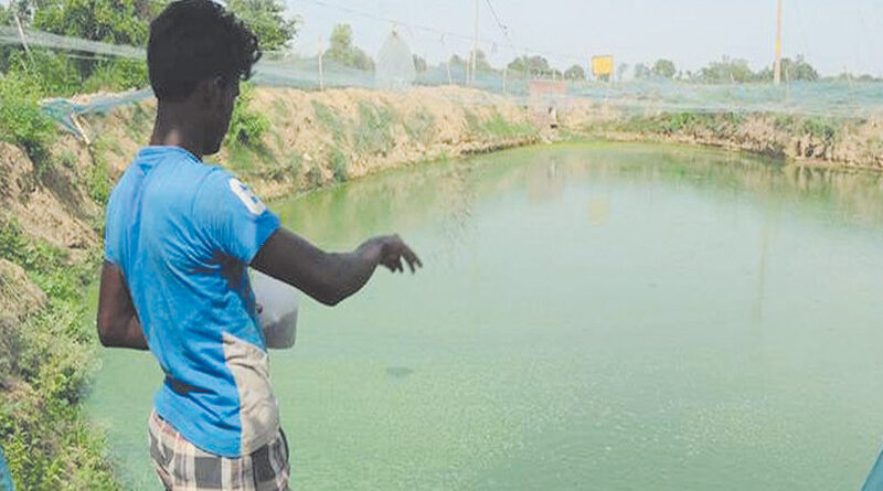 Preparation of pond for fishery