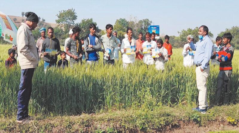 Wheat crop demonstration organized of Grow Plus