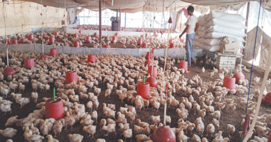 Prevention of outbreak of bird flu in chickens