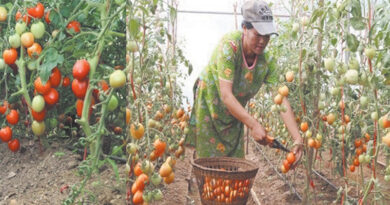 University of Horticulture and Forestry will promote advanced farming