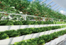 Future of Agriculture: Smart Farming