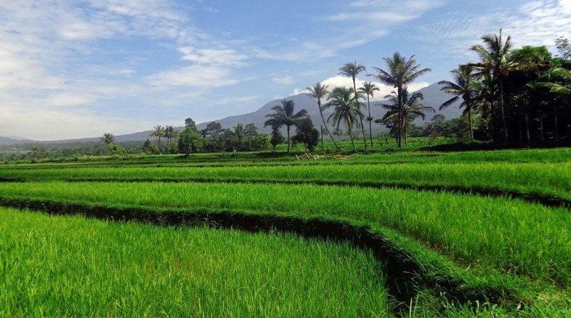 खेती में मशीनीकरण को बढ़ावा देने की भारत सरकार की पहल
