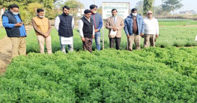 Performance of pulses crops in KVK Panna