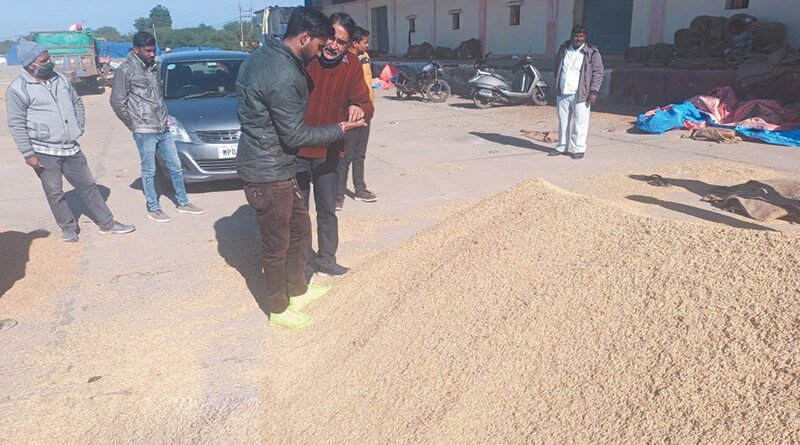 Markfed's important role in paddy purchase of Madhya Pradesh