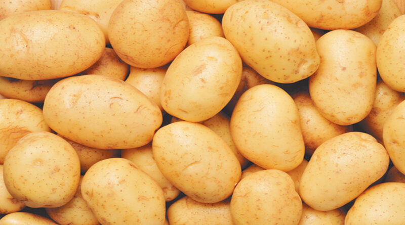 Selection of potato crop in Indore district