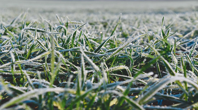To prevent frost, do light irrigation in crops.