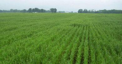 Take care of Rabi crops in the changing season