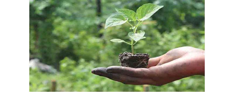 Environmental Nutrients - Indore Biotech