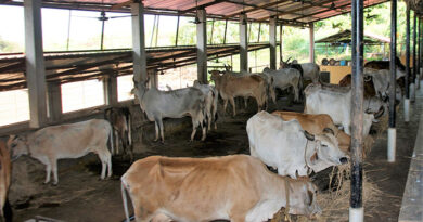 cow-shed-10
