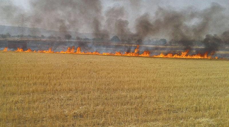 fasal-burn11